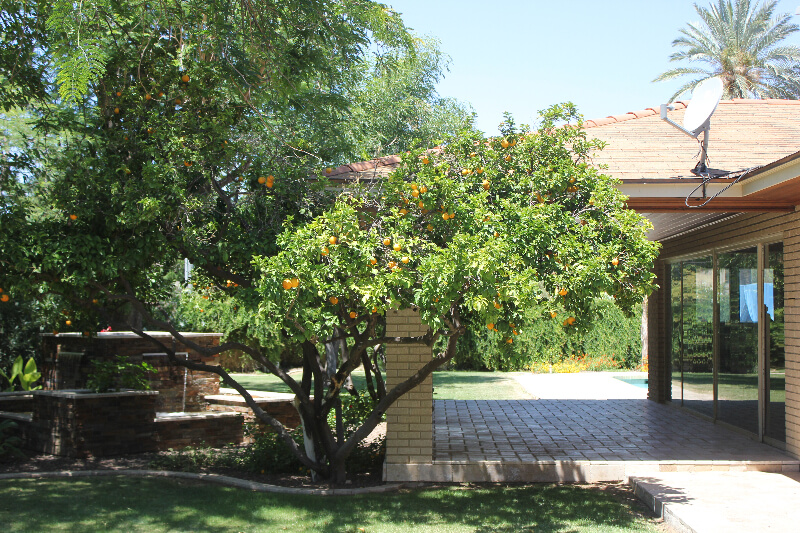 An orange tree planted next to the beautiful fountain our Mesa landscapers built.