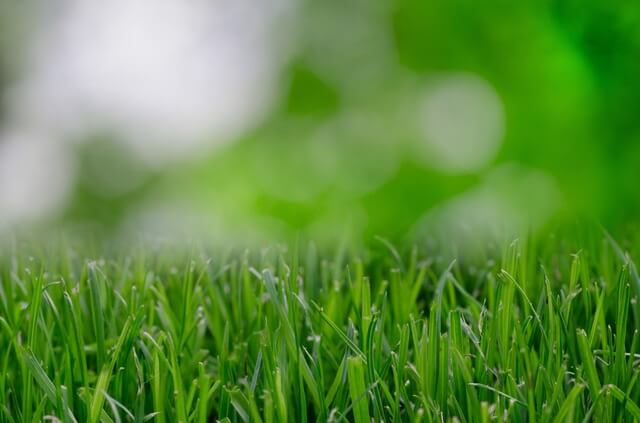 An up-close look at what your Arizona synthetic grass may look like