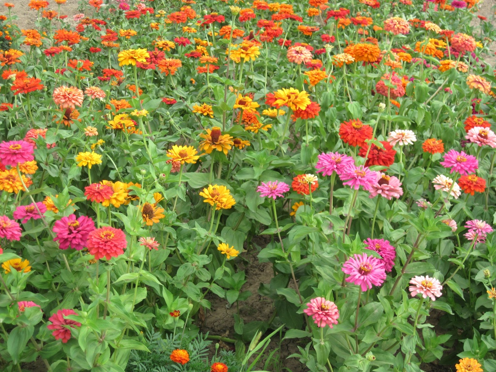 Add color to your yard with desert flowers in Arizona