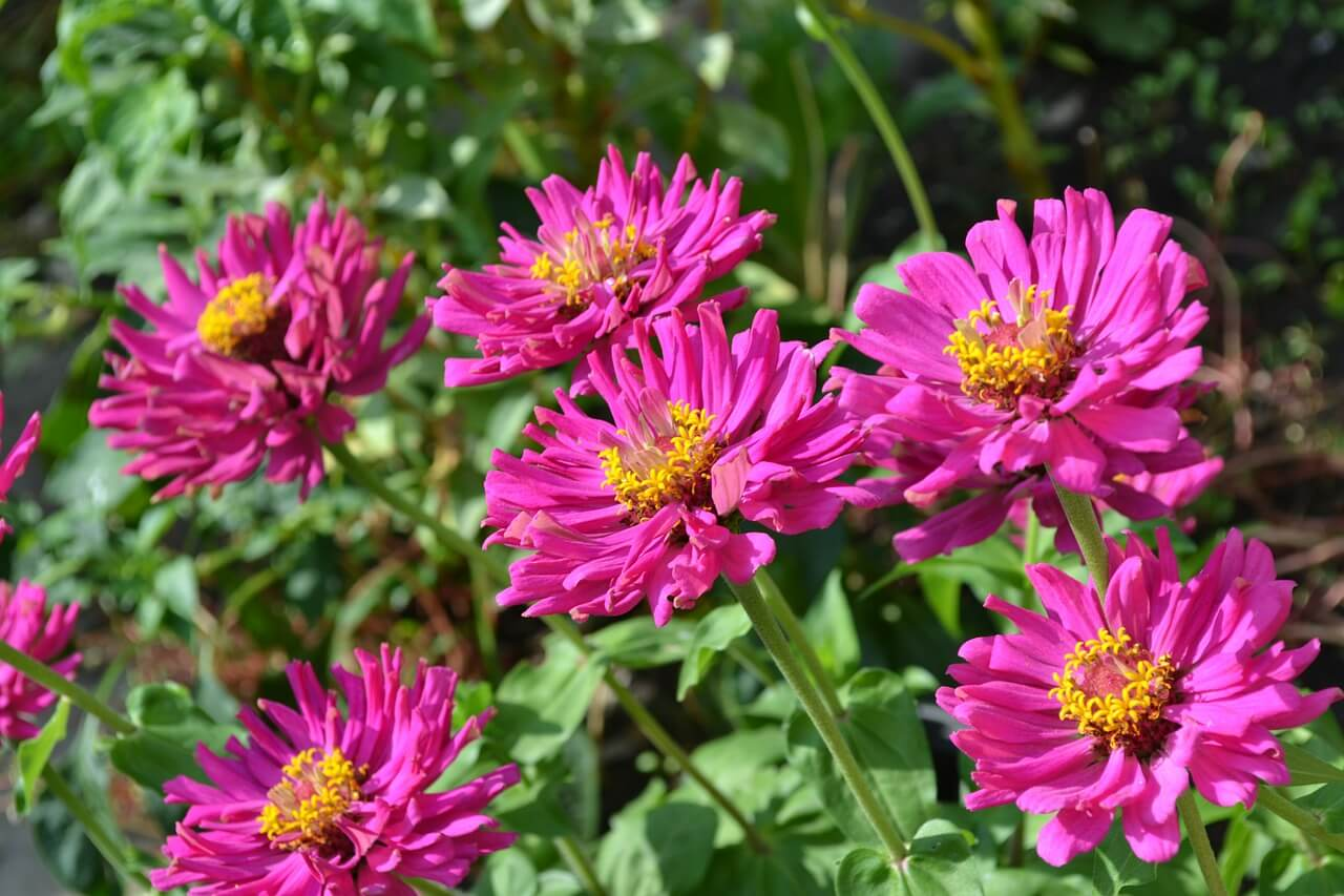 Floriculture Services Care For Your Arizona Desert