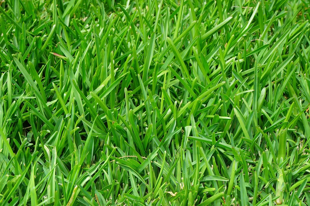 Get the best grass fertilizer for your lawn from New Image