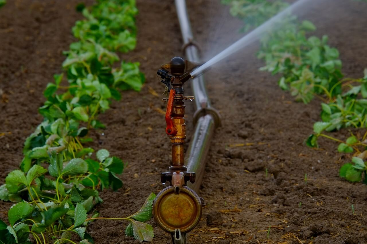 A lawn irrigation system can keep your garden looking great