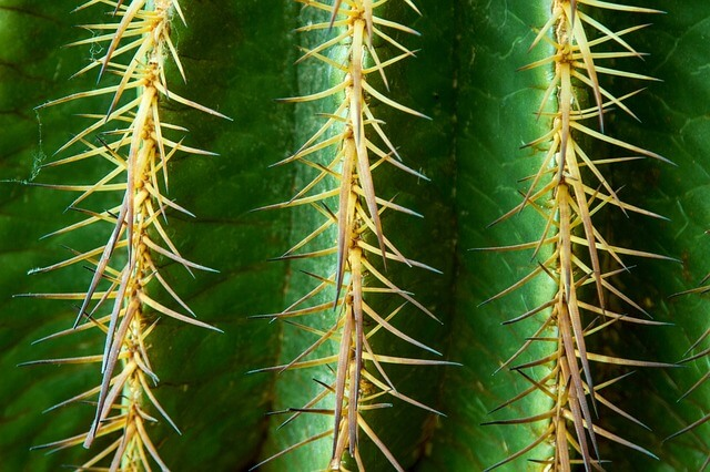Using Cacti for your Arizona Landscape