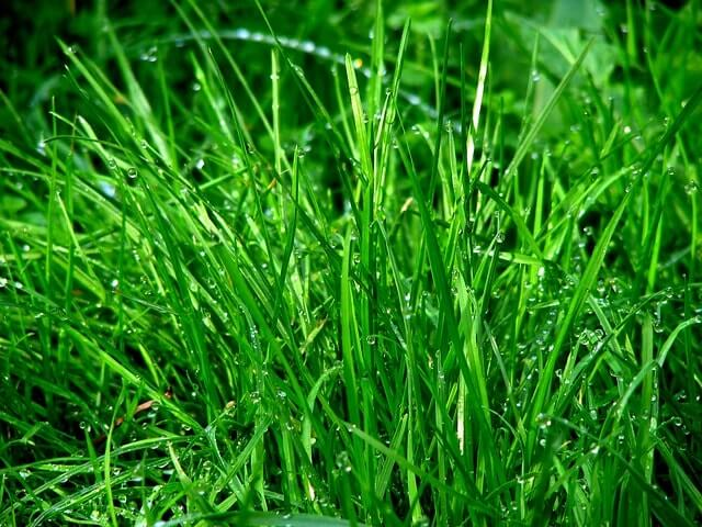 Best Strains of Grass for Arizona Lawns