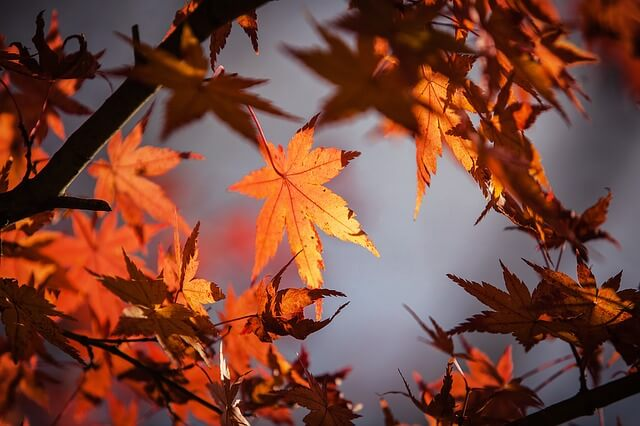 5 Tips for Landscape Maintenance in Fall