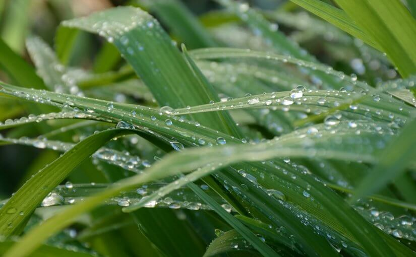 Top Benefits of Using an Automatic Sprinkler System