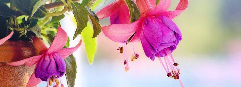 Beautiful flowers being grown while gardening in arizona