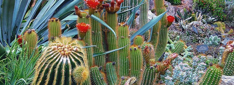 Water Conservation in Arizona