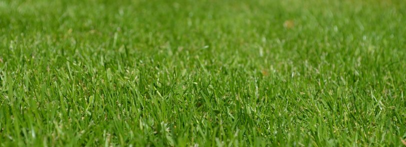 Learn how to seed your lawn to grow grass in a