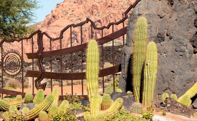 3 Tips to Make Your Arizona Landscape Stand Out