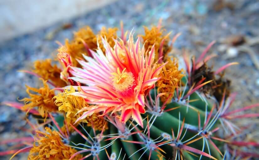3 Arizona Gardening Tips for Keeping Your Garden Healthy