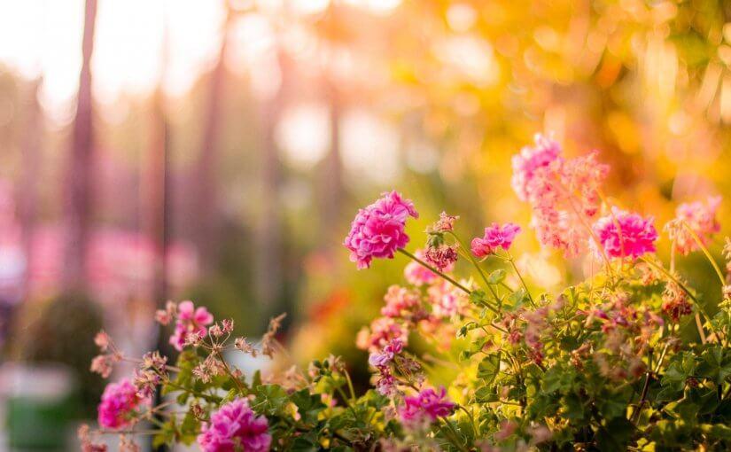 Gardening Tips for Fall