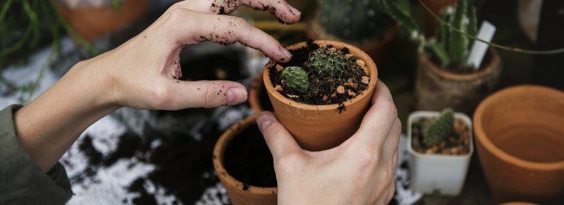 Arizona garden ideas