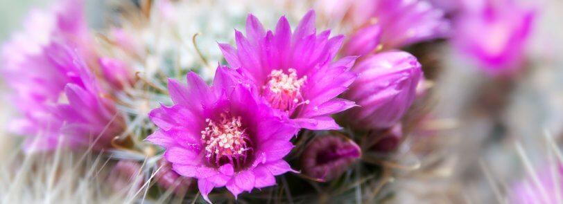 Arizona Winter Plants