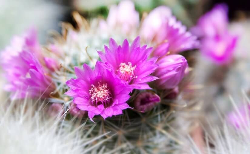 3 Arizona Winter Plants to Brighten Your Yard