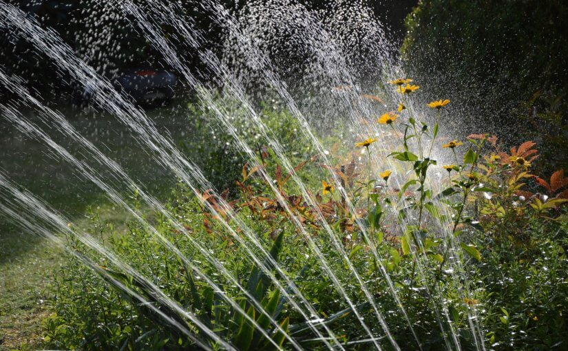 Summer Water Saving Tips & Secrets