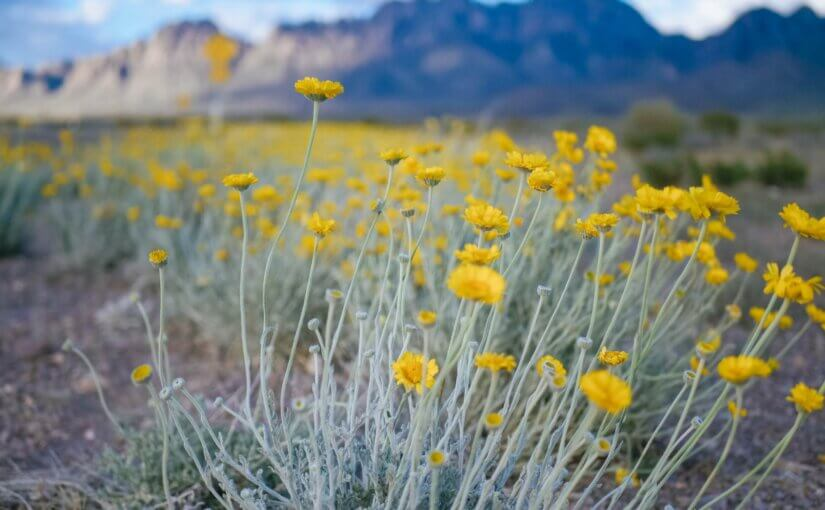 Low Water Plants for Your Desert Yard