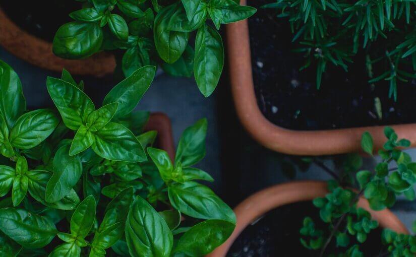 Best Plants for an Arizona Herb Garden