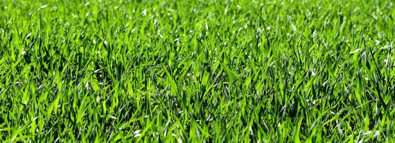 There's amazing grass choices for prepping your yard for spring