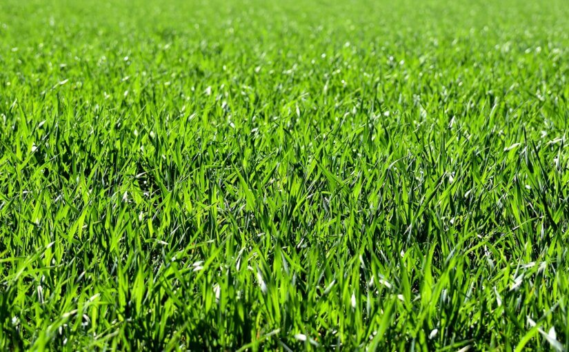 Get Your Grass Yard Ready for Spring