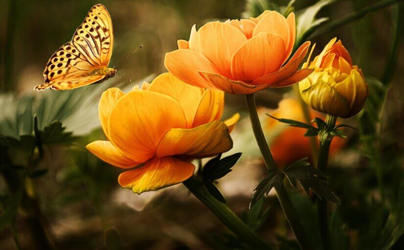 Your choice of Arizona flowers can attract butterflies and more to your garden