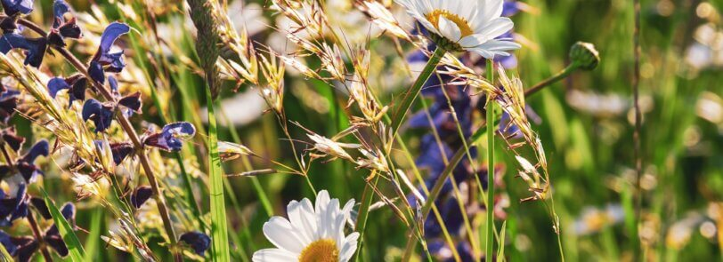 Add wonderful Arizona plants like sage to your yard today